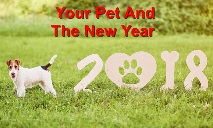 How to Celebrate the New Year with Your Pet